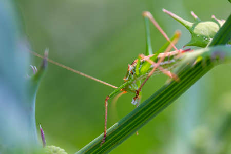 a green grasshopper sits in the grass