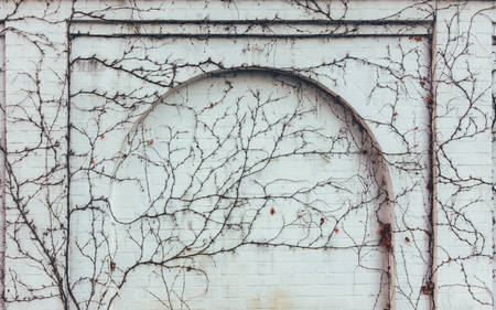 white brick wall with an arch overgrown with climbing plants Stock Photo