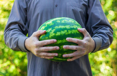 a man holds a ripe green watermelon in his hands Stock Photo