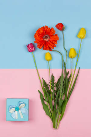 bouquet of flowers of yellow and red tulips and red poppy and a blue box with a gift on a pink and blue background top view