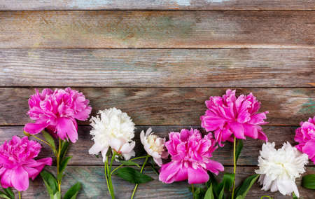bunch of pink and white peony flowers close-up on wooden retro background with copy space Stock Photo