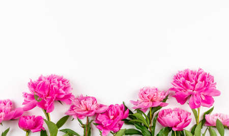 pink peony flowers on a white background with a copy space
