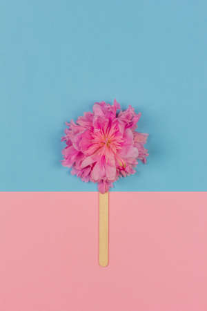 abstract ice cream of pink peony flower on wooden ice cream stick on pink blue background top view flat lay