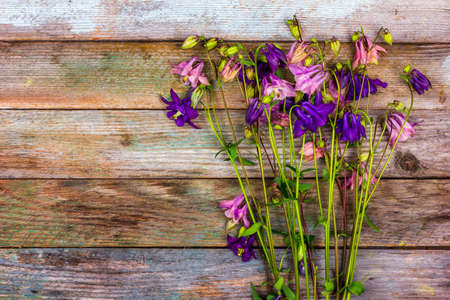 bouquet of pink and blue aquilegia flowers on a retro wooden background with a copy space top view