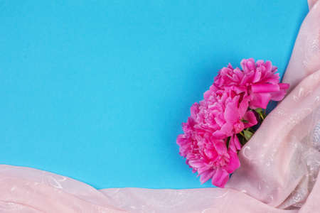 Bouquet of dark pink peony flowers close up and pink fabric on blue background with copy space Stock Photo