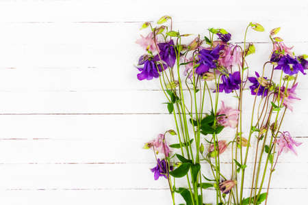 white wooden table with pink and blue aquilegia flowers with copy space top view