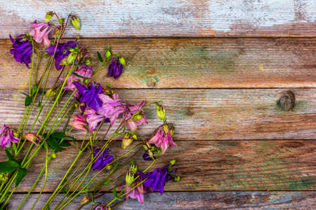 A bunch of pink and blue aquilegia flowers on a retro wooden background with a copy space top view