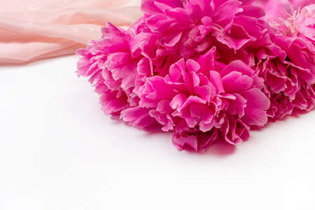 Bouquet of dark pink peony flowers close-up and pink fabric on white background with copy space Stock Photo