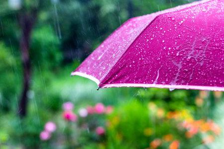 purple umbrella under the summer rain on the background of a green garden