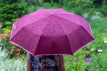 a young woman with a purple umbrella in the park on a rainy summer day view from the back Stock Photo