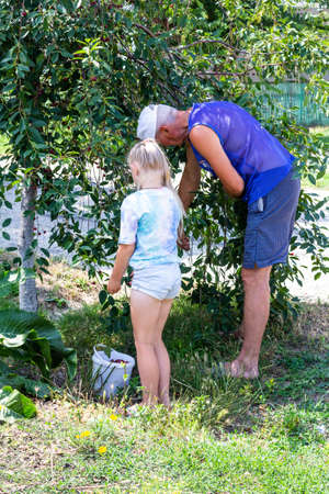 granddaughter and grandfather pick ripe cherry berries from a tree in the garden on a summer day Stock Photo