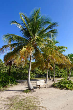 key biscayne: Bench under a palm tree overlooking the Atlantic ocean. Key Biscayne, Florida, US.