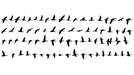 77 Silhouettes of flying Geese Standard-Bild