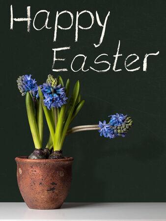 hyacinths: Happy Easter with blue Hyacinths