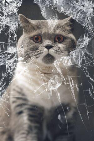 ventana rota: Gato inocente que mira a trav�s de la ventana rota