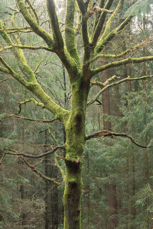 Photo of a tree covered with moss in the forest Standard-Bild
