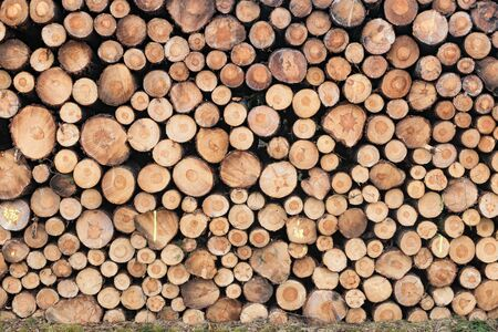 Photo of a stack of natural wooden logs Standard-Bild