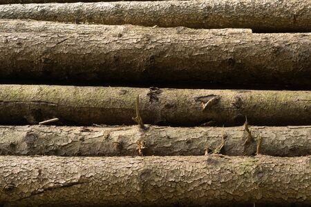 Photo of a stack of natural wooden logs Lizenzfreie Bilder