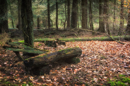 An old decayed park bench in the forest Standard-Bild