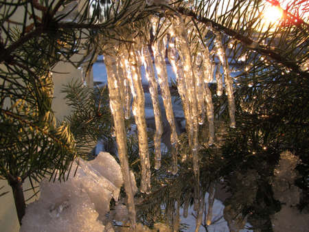 Icicles in golden evening sun