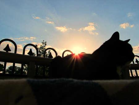 setting sun: Cat in the setting sun