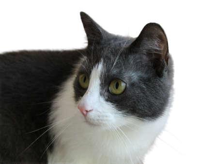 optionnel: Cat - en option sur fond blanc