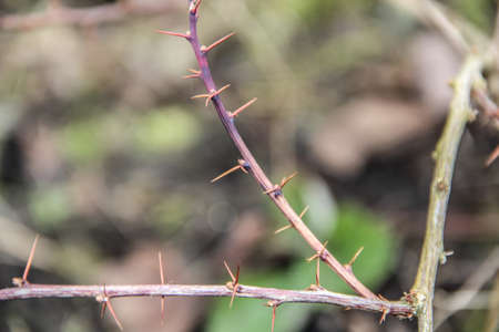 schutz: Thorns on the branch