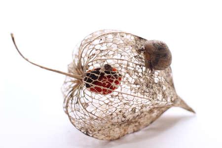 Snail on plant Reklamní fotografie