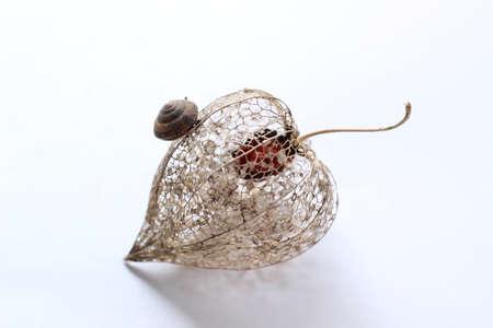 snail shell Reklamní fotografie