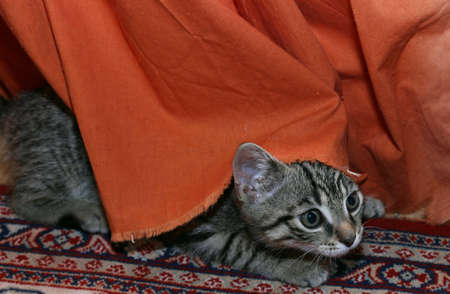 baby tiger: Gatti Baby - Tiger Archivio Fotografico