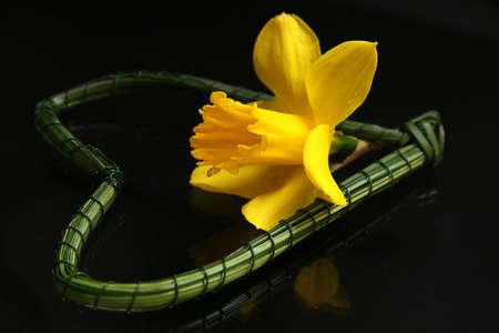 daffodil: Daffodil Heart