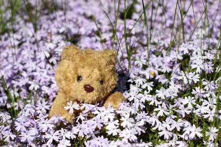 blumen: Teddy in Blumen