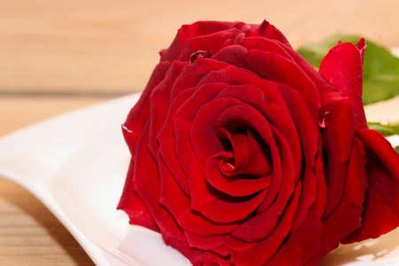 rote: Rote Rose