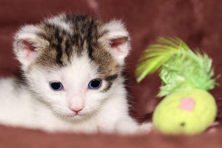 nahaufnahme: Katzenbaby Stock Photo