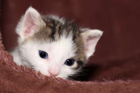 nahaufnahme: Babykatze