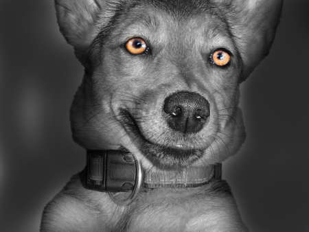 nahaufnahme: Hund