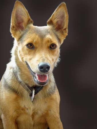 nahaufnahme: Hund Lotti