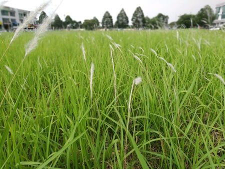 A field of feahered grasses in the middle of busy city