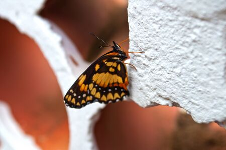 Beatifull butterfly close on wall of leaked bricks