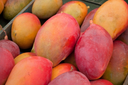 Pretty closse of many mangos Stock Photo - 14633988