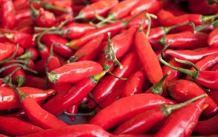 tabasco: Fresh red chilli pepper