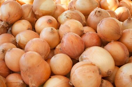 Close of group of onion Stock Photo - 14685247