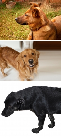 Pretty Dog collection