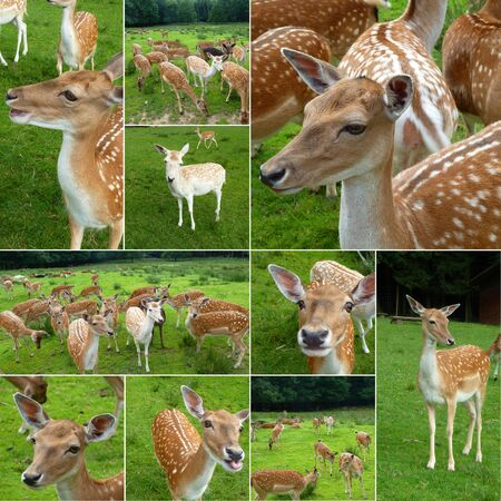 Collage Deer photo