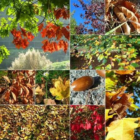 Collage Golden Autumn in Germany  photo