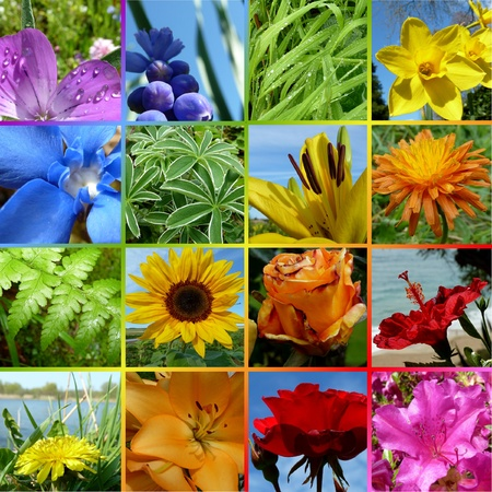 Rainbow Collage Colorful Flowers photo