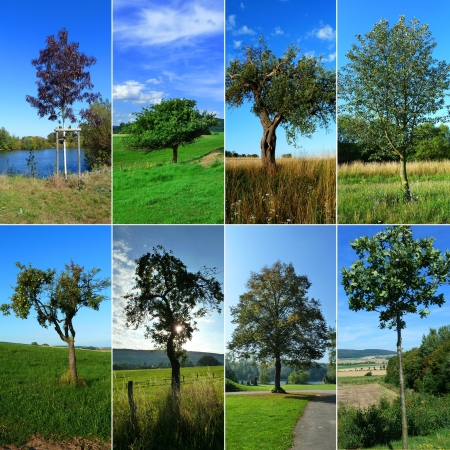 Collage of trees in the summer in Germany photo