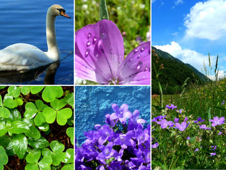 Collage Blue Green Pink Blue Nature Swan Mountains Stock Photo - 11614944