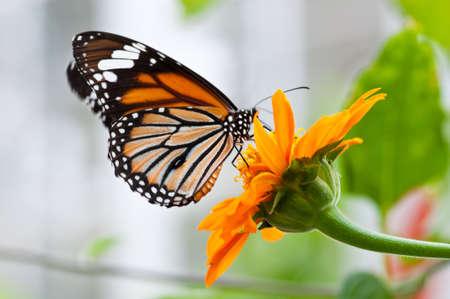 Papillon et fleur sont si belles dans le parc dans le Moring bien un jour Banque d'images - 17968446