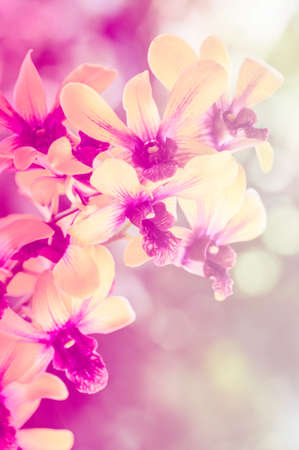 Sweet orchid on soft background